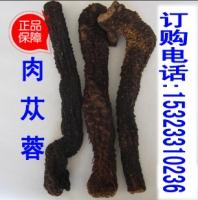 广州深圳东莞中山佛山珠海惠州河源汕头梅州哪里有肉苁蓉锁阳卖